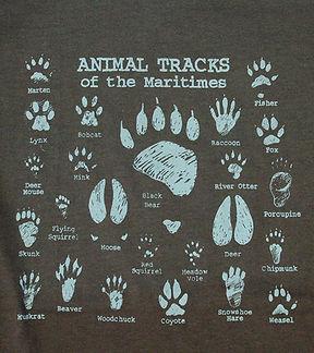 AnimalTracks.JPG