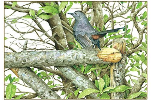 Catbird & Magnolia