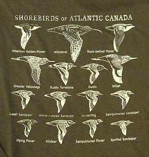 Shorebirds.JPG