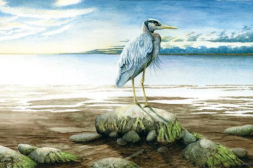 Heron Morning Tide
