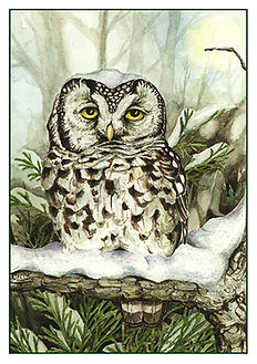 owl [Converted].jpg