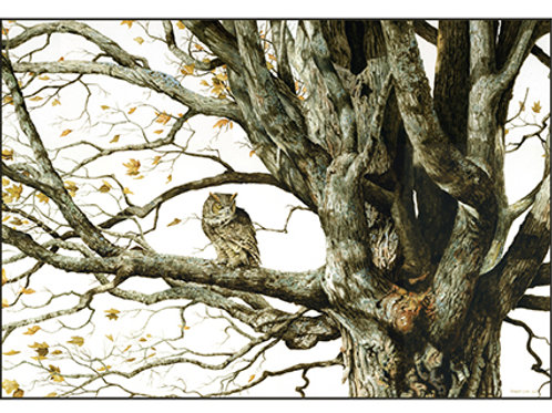 Old Maple - Great-horned Owl