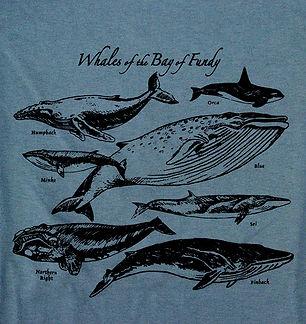 WhalesOfTheBayOfFundy.JPG