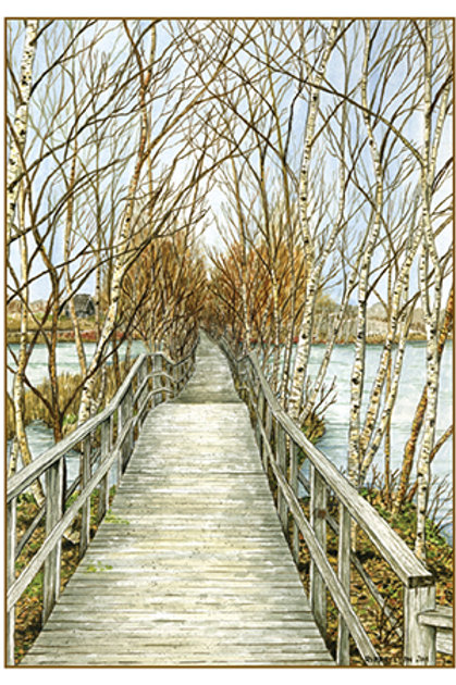 Boardwalk through Birches