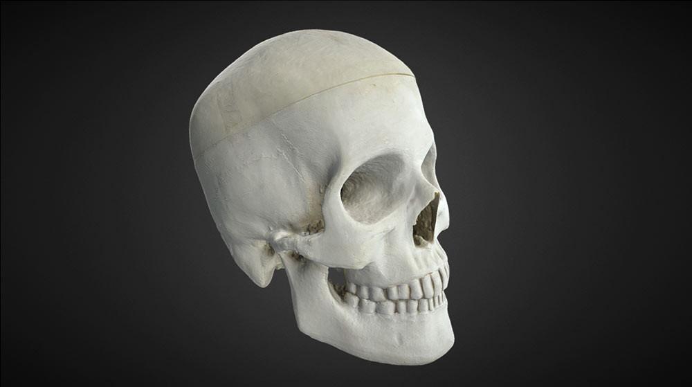 Skull 3d scanning