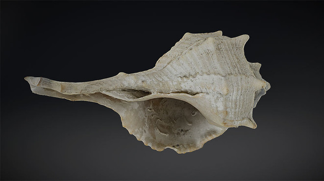 Shell 3d scan