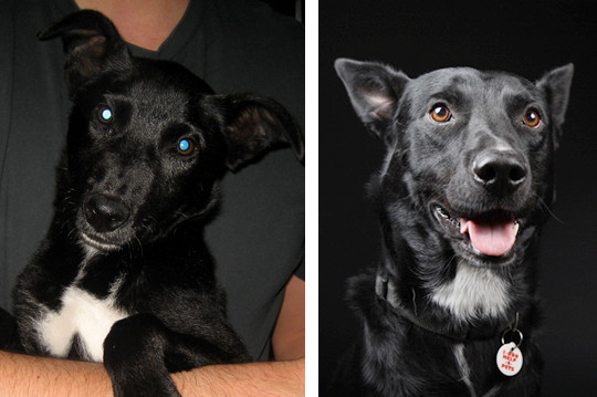 A photo of a black dog taken with a cell photo vs. a professionally lit photo.