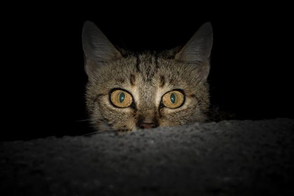 Frightened cat hiding in the dark.