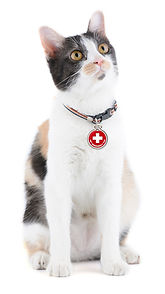 The Pet Emergency Tag works on any animal who may be in danger of being separated from their family