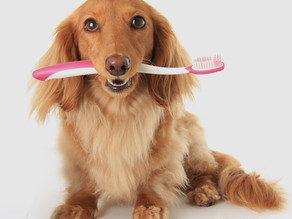 Are You Afraid To Get Your Pet's Teeth Cleaned? We Get That.