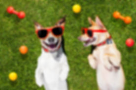 Two Funny Playing Dogs.jpg