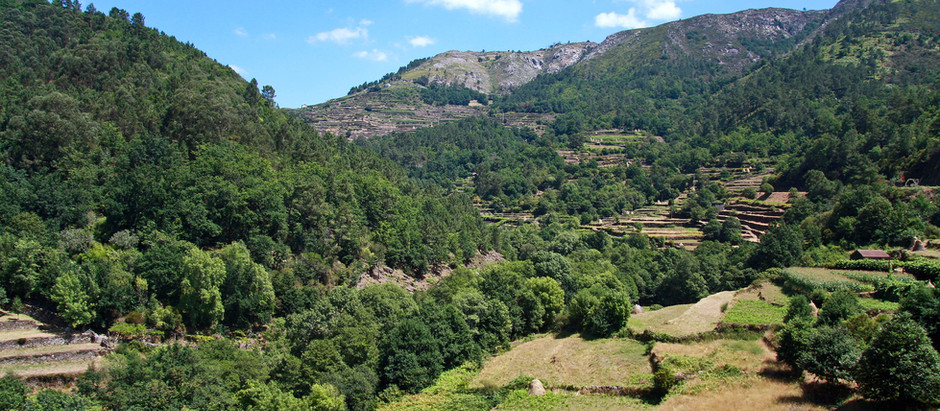 Things to Consider when Buying Rural Land in Portugal