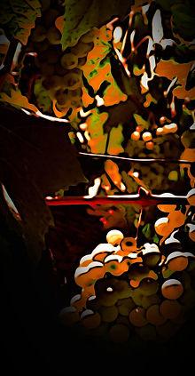 homestead_edited.jpg