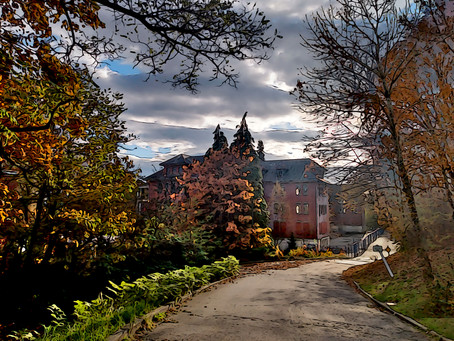 The Ghost Tree at Vancouver's Abandoned Insane Asylum, Riverview Hospital