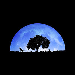 Molly, Timmy, and an iconic cork oak silhouetted by the moon