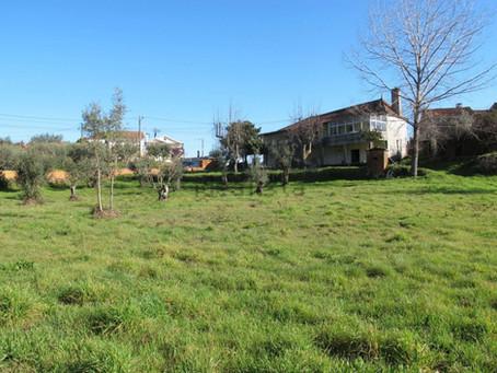 Near Pedrógão Grande - Large Farmhouse, Sweet Plot