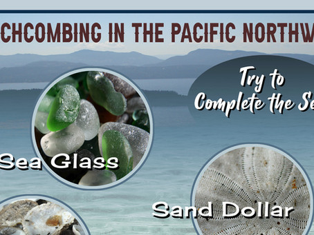 Portfolio: Beachcombing in the Pacific Northwest