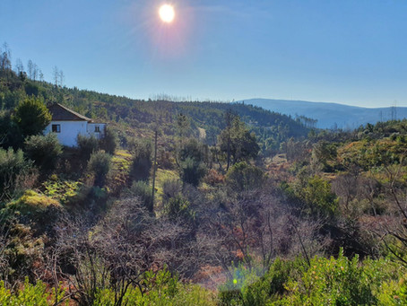 Taking a Peek at Property in Central Portugal: Thought Provoking
