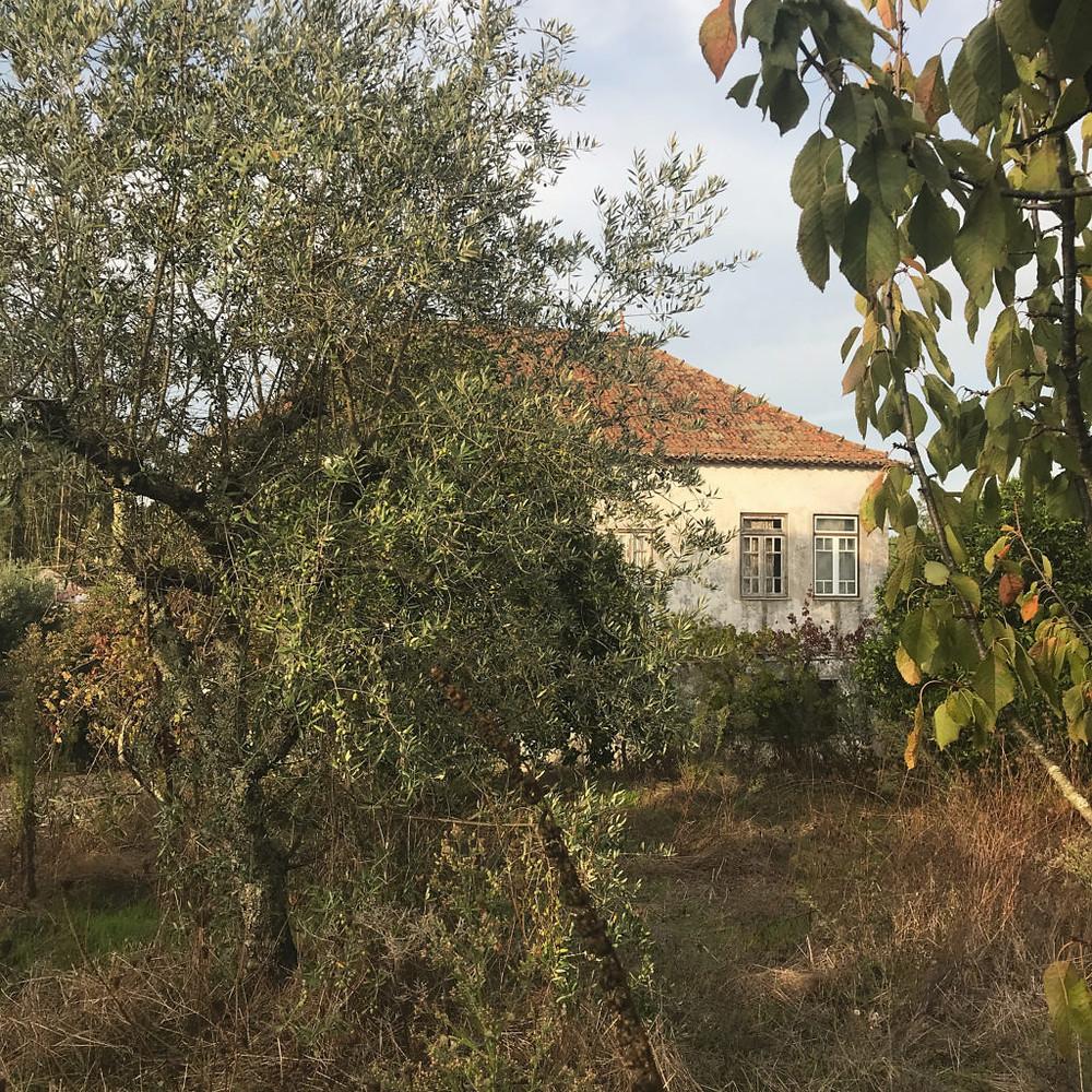 Traditional Portuguese farmhouse in need of restoration in Castelo Branco District, Municipality of Sertã