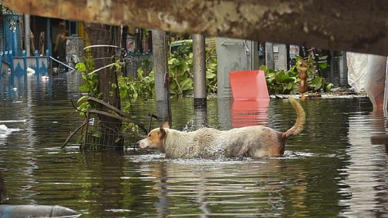 Cyclone Update - Kolkata