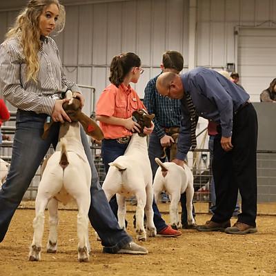 Goats/Lambs