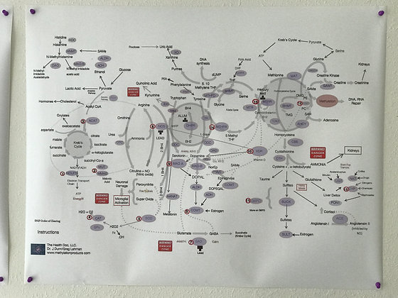 Large Methylation Pathway Wall Chart