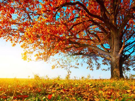 Cultivating Self Care, Gratitude & Nourishment