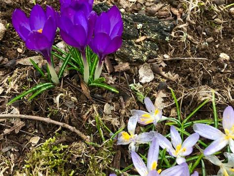 Spring, The Season of Rebirth