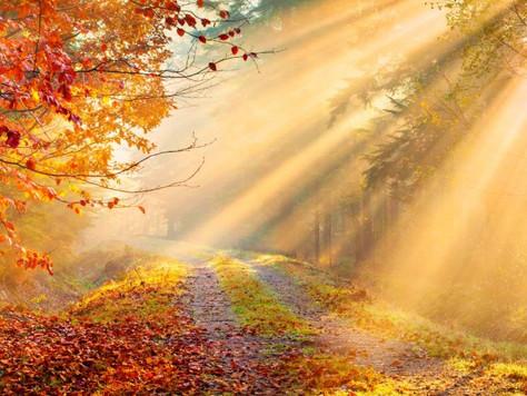 Harvest, Transition &Exploration this Autumn
