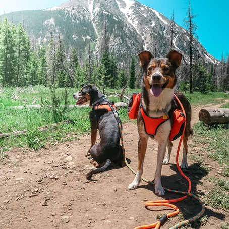 Tips to get your dogs ready for the road