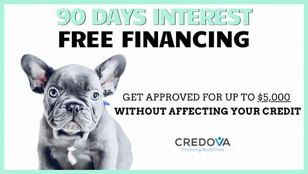 french bulldog puppy financing