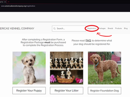 How to Register your Frenchie
