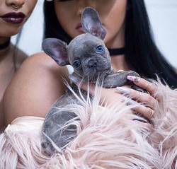 Gatsby! _abigailratchford & 📷_ _lkbphotography 💙 Gatsby is a #LilacGravy baby!