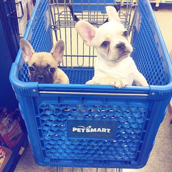 Charlie & Cade today _petsmart 💙 #reserved