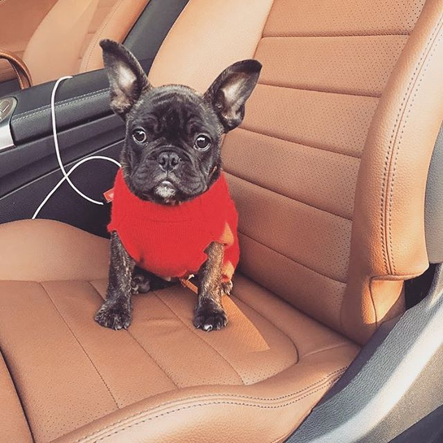 Baby in da Benz! #TheLifeOfHazelGrace _jenskiver ❤️shop _ivyleash link at the top of profile!