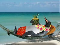 pinguino su sdraio al mare