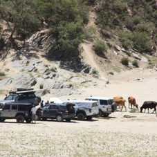 4x4's gathering in the Gourits River