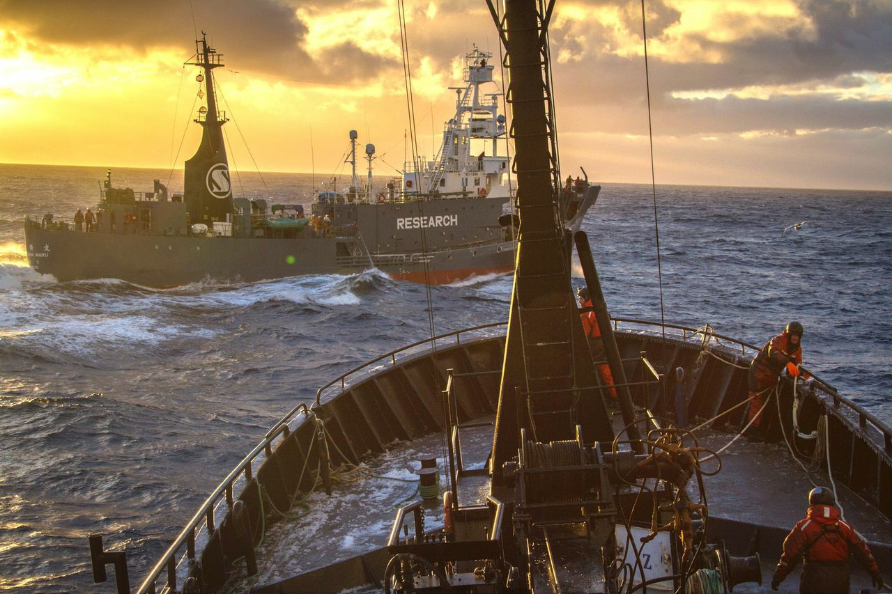 Sea Shep image