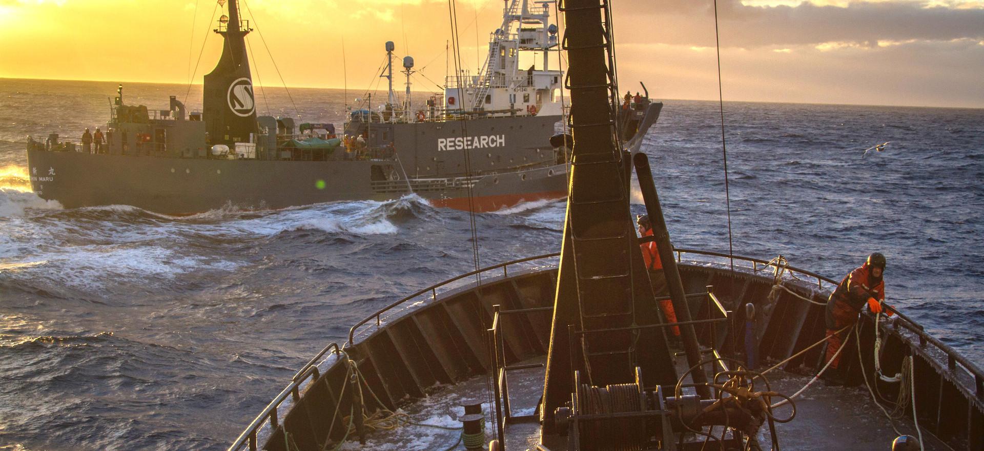 The Japanese Whaling Fleet in Antarctica