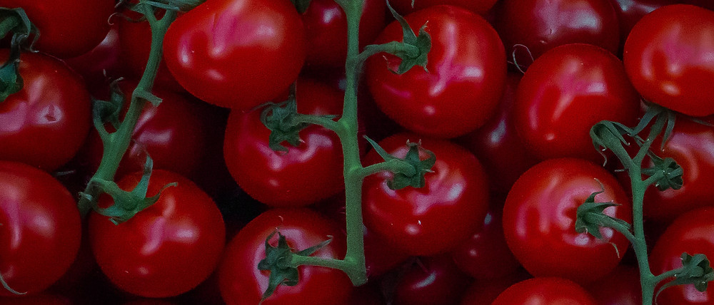 Close up image of tomatoes