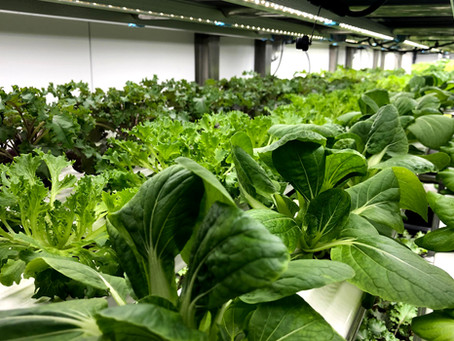 Liberty Produce and Partners are transforming the vertical farming landscape