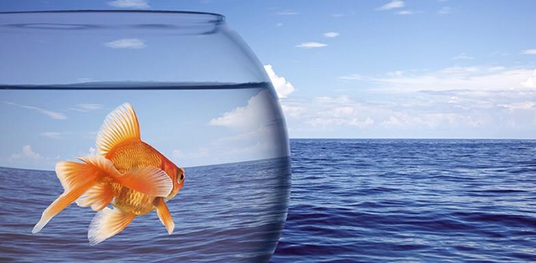 Hiring for Entrepreneurial Mindset, Recipe for Success