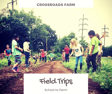 Crossroads Farm (7).png