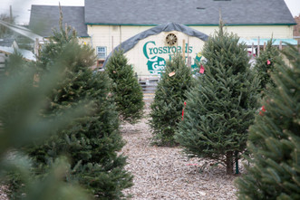 At The Farm: Christmas Trees and Santa!