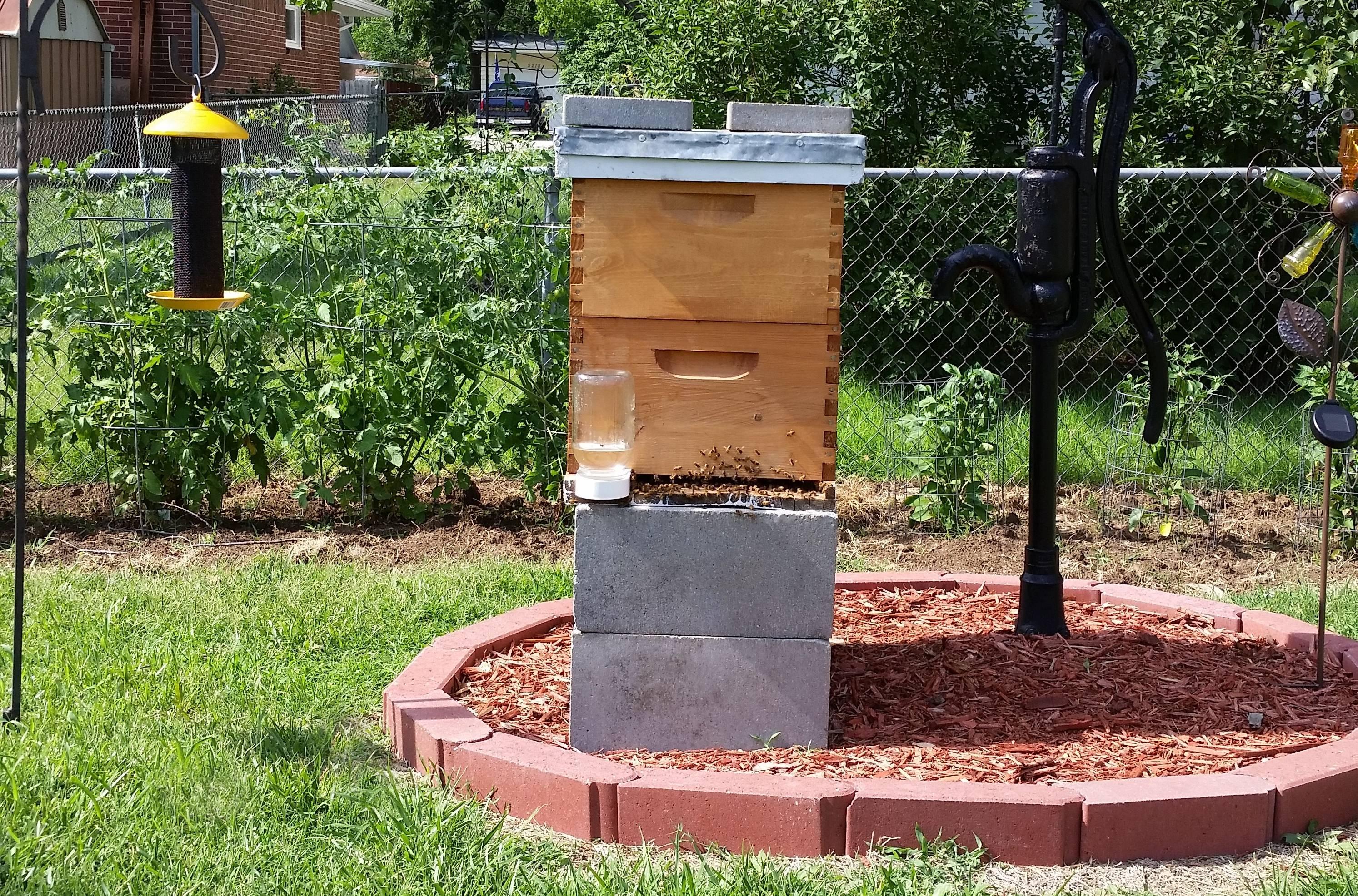 Honey Bee Hive.
