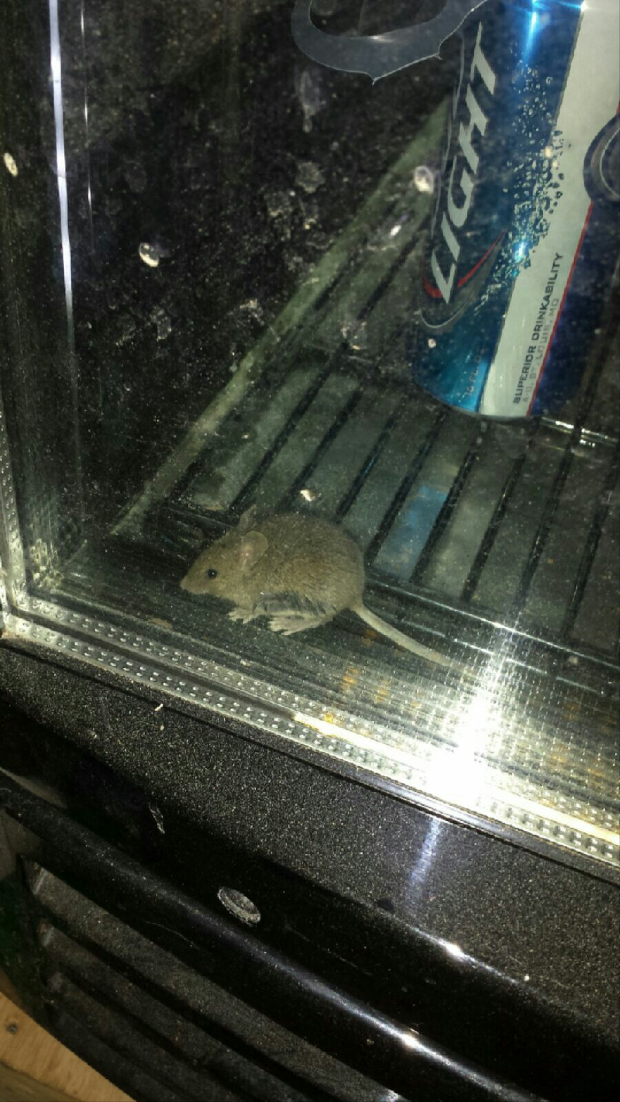 Mouse in a cooler.