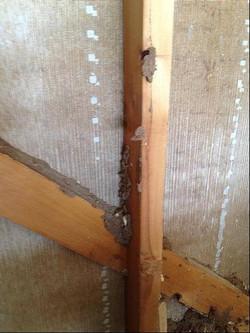 Termite mud run in a garage we treat
