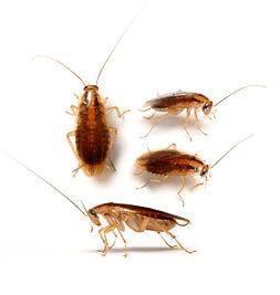 cockroachgermangroup1.jpg