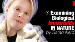 Examining Biological Immortality InNature by Sarah Ikerd #016