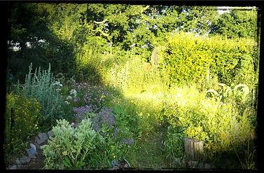 Medicinal Herb Labyrint